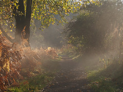Misty morning hop. photo by jooleyg