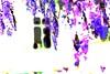 9484888148_d3ff85d72c_t