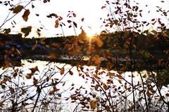 131011 - suddenly autumn photo by *Maren*