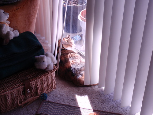 Kitty in a Sunbeam
