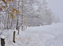 Winter time photo by ceca67