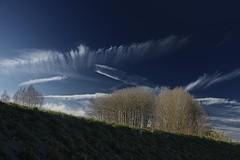 Trees 001 photo by cees van gastel