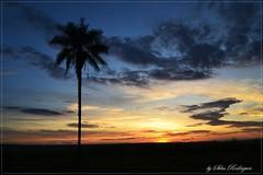 Cores de um amanhecer photo by Silas Rodrigues