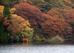 Torii sur le lac Ashinoko / Japon photo by PtiteArvine