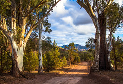 Twin Gums, Flinders Ranges South Australia
