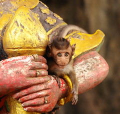 ,, Baby Primate ,, photo by Jon in Thailand
