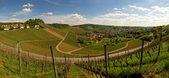 Uhlbach surrounded by Vineyards photo by Batikart