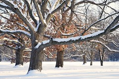 Winter Wonderland photo by jrobfoto.com