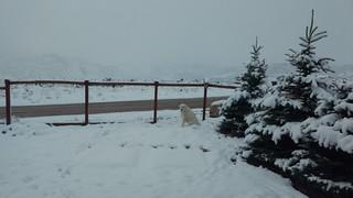 Mavis enjoys the snow