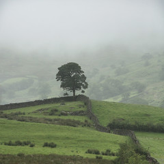 Lone tree, Hartrigg, Kentmere, Lake District National Park, Cumbria, UK photo by Ministry