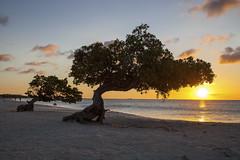 Eagle Beach Sunset Aruba photo by Critter Seeker