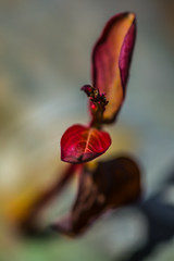 Fire Leaf photo by Drachenfanger
