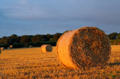 Make hay whilst the sun shines. :) photo by timbo on the hill