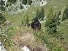 Chocard Des Alpes