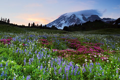 Paradise Wildflowers, Mount Rainier National Park photo by Neanderthal EAJ