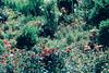 19951852602_fc5631f3be_t