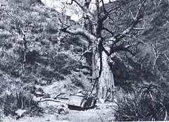1941- Erythrée