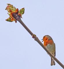 Spring Chorus photo by Gaz-zee-boh