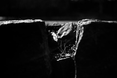 Grass photo by primitiveprobe