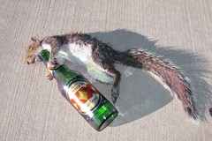 Drunk Squirrel (IMG_2401) photo by ViewFromTheStreet