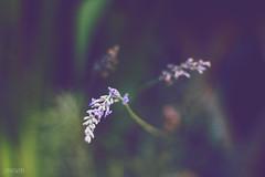 Blue photo by Zaparowana