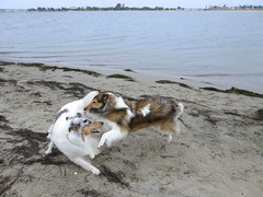 Playtime! photo by HowtoLoveYourDog.com