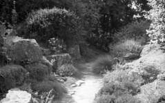 England 1938 Wisley Garden 4-031 photo by rich701