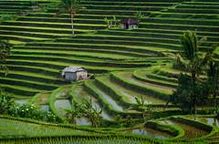 Jatiluwih, Bali, Indonesia photo by EdBob