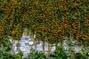 34008289322_0ed178d852_t