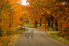 Autumn Road photo by Tim Lindstedt (Thanks for 200.000 views!)