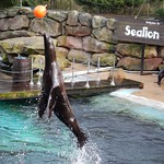 Sealions happy to put on a show<br/>15 Feb 2014