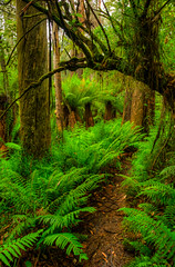 The Dandenongs Forest photo by Carlos Barrero
