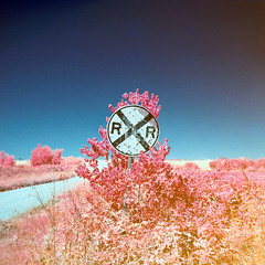 color infrared crossing. marysville, ca. 2013. photo by eyetwist
