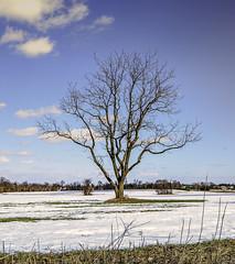 A lonely tree_DSC9102 photoshop NIJ edit photo by nkatesphotography
