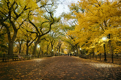 New York Autumn - Central Park - Poet's Walk - Dusk- photo by Vivienne Gucwa