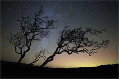 Hawthorn Tree and the Milky Way photo by Mike Bolam