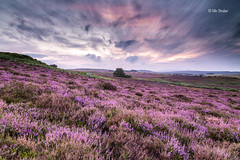Fields of Heather photo by Michael Straker