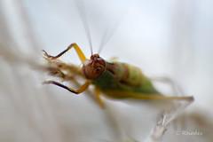 Cricket (Explore Sept 22 2013) photo by ozVADERzo