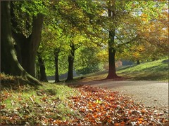 Autumn, Studley Royal, North Yorkshire photo by robin denton