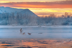 Walking The Dogs photo by Gary Randall