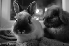 Dont mess with the bunnies ! photo by Mark Philpott