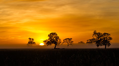 Tree Silhouette in the Foggy Sunrise [Explored] photo by Jacqui Barker Photography