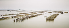 A Million Sticks photo by parkerbernd