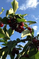 www.apuliadestination.com photo by www.apuliadestination.com