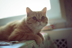 209/365 Stylish cat photo by Marina Kasianenko
