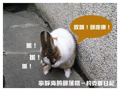 約克夏日記_20060215_抓抓頭