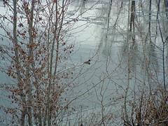 40 winter river