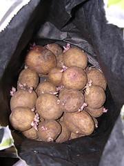 Potatis liten