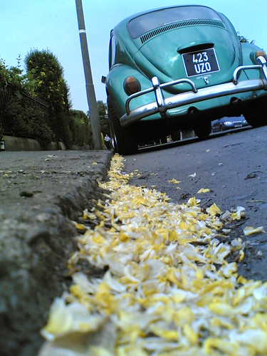 Fallen Flower Petals & A Bug