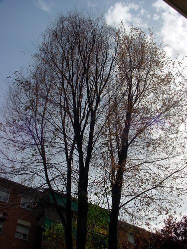 Tree 02 of 22